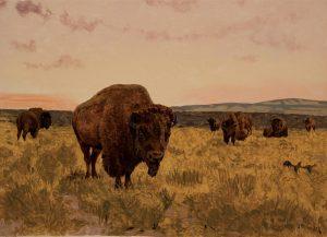 Untitled (Bison)